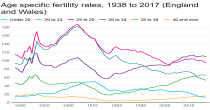 Age specific fertility rates image